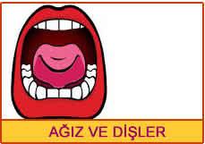 ağız ve dişler