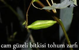 cam-guzeli