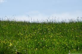 çayır ekosistemi