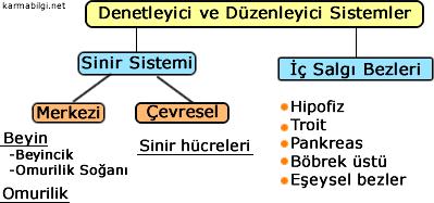 denetleyici-ve-duzenleyici-sistemler