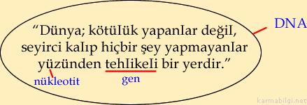 dna-gen-nükleotit