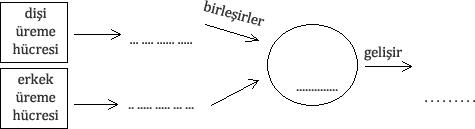 embriyo-soru