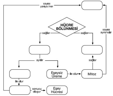 genetik-kavram-haritasi