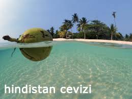hindistan-cevizi
