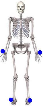 kısa kemikler