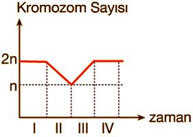 kromozom-grafik