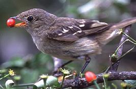 kuş ve tohum