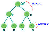 mayoz-soru