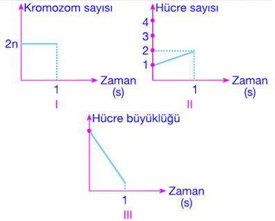 mitoz-soru-51