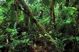 orman-ekosistemi