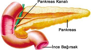pankreas kanalı