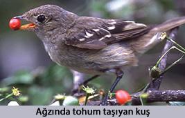 Tohum taşıyan kuş