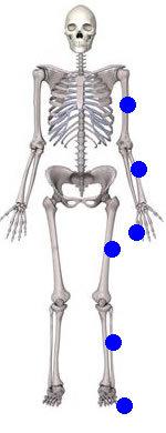 uzun-kemikler
