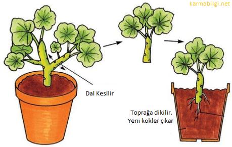 Bitkilerin vejetatif ve üreme organları