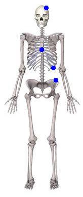 yassı kemik