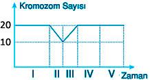 kromozom-sayisi-soru