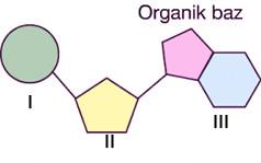 organik-baz-soru